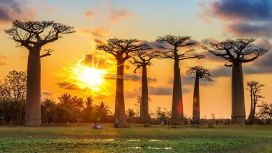 آفریقا