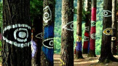 جنگل اوما