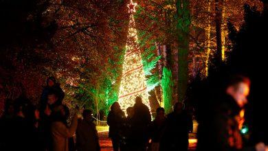 رویداد «باغ کریسمس»