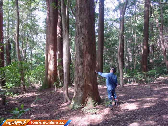 جنگل تجربی