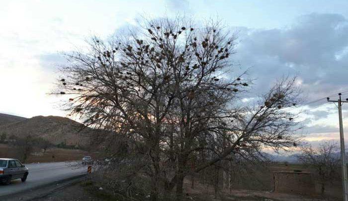 درخت مهربانی