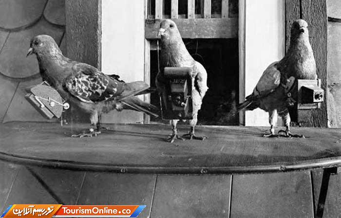 کبوتر عکاس