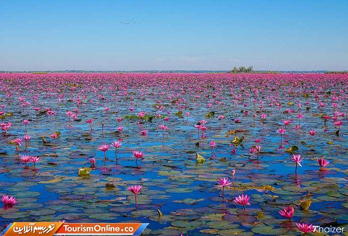 دریاچه لوتوس