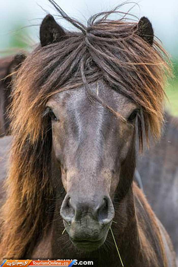 یال اسب