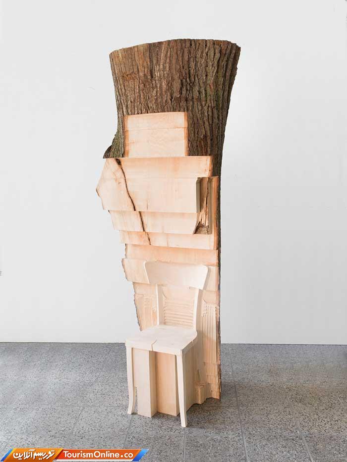 تنه های درخت