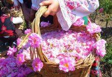 گل غلتان و گلاب