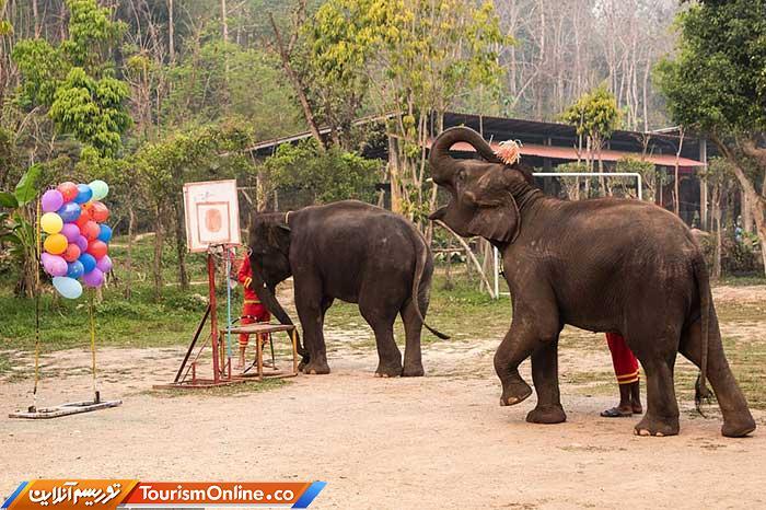 فیلهای تایلندی