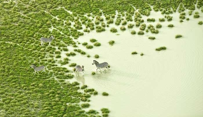 بوتسوانا و ایسلند