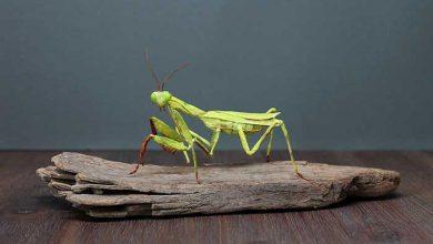 حشرات کاغذی
