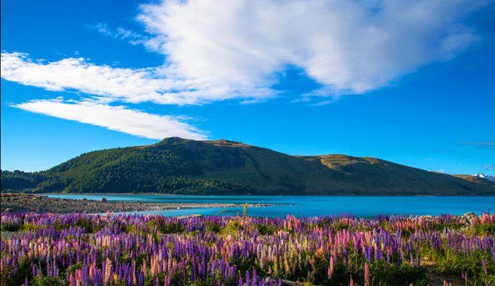 دریاچه پوکاکی