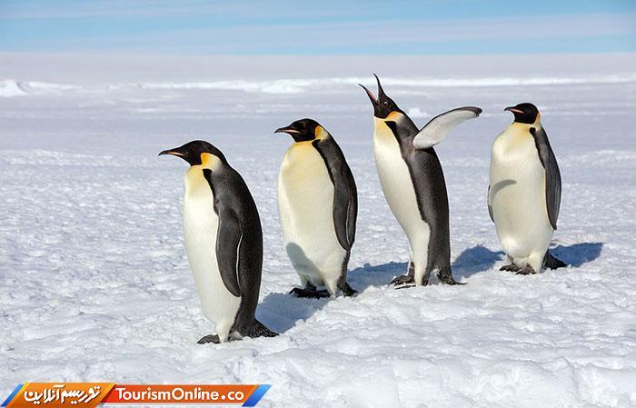 پنگوئن