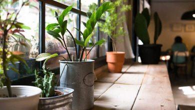 نگهداری گیاهان