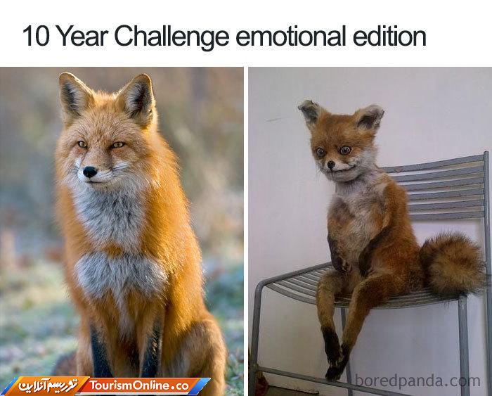 چالش 10 ساله