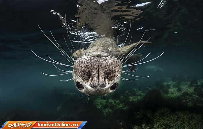 عکاسی زیر آب