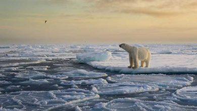 عکاسی در قطب
