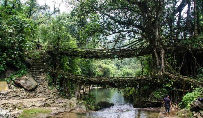 پل دوطبقه درختی در هند