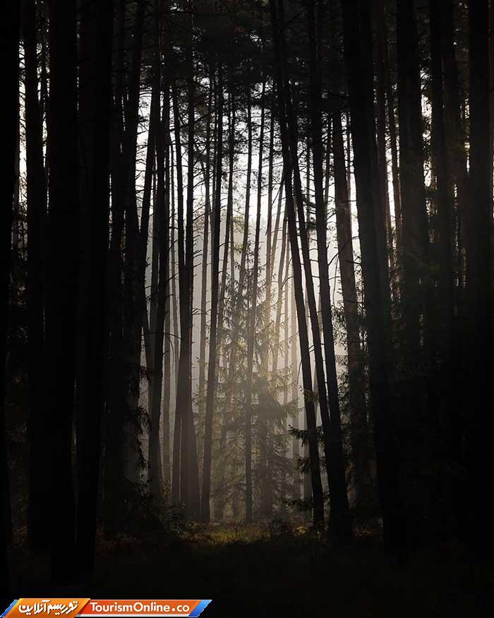 جنگل های لهستان