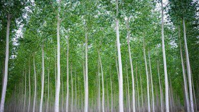 مزرعه درختی