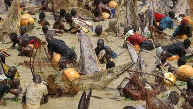 فستیوال ماهیگیری