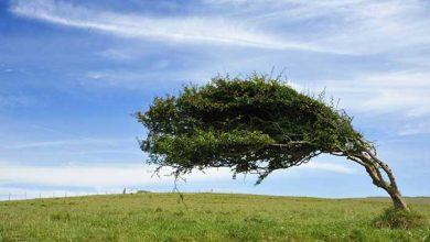درختان بربادرفته