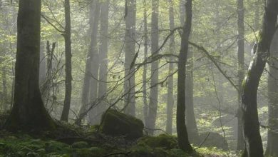 جنگلهای هیرکانی