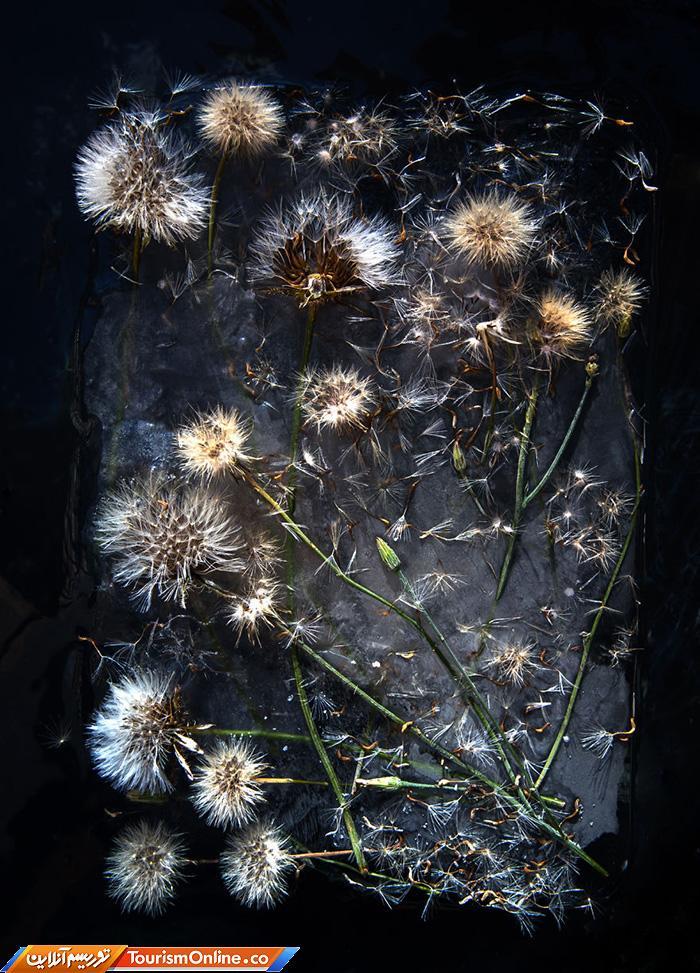 سوژه گل