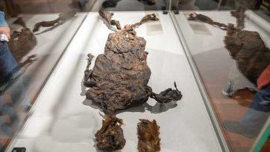 باستانشناسی و هنر سرزمین هلند