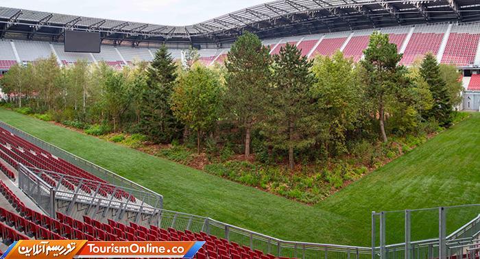 استادیوم جنگلی