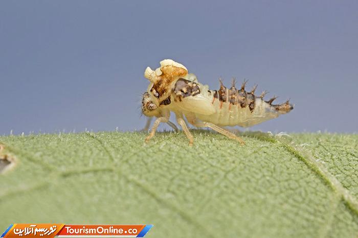عکاس ماکرو حشرات