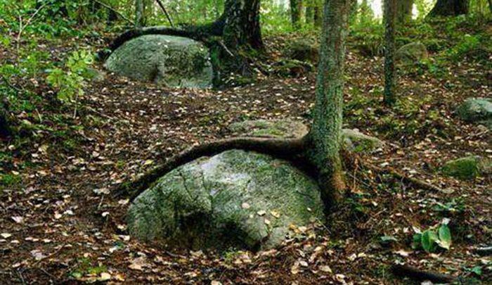 جنگل پوکاینی