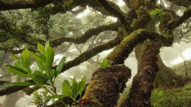 عکاسی از جنگل
