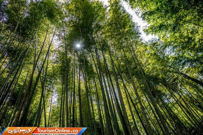 جنگل بامبوی ساگانو