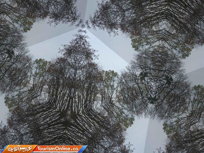 موزائیک جنگلی