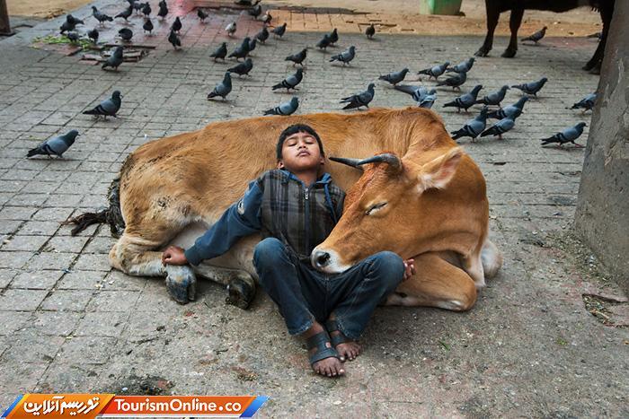 رابطه دوستی میان انسان و حیوان