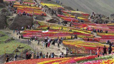 گل های لاله کرج