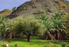 روستای کوهشاه ریگان
