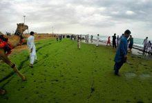 پدیده ساحل سبز