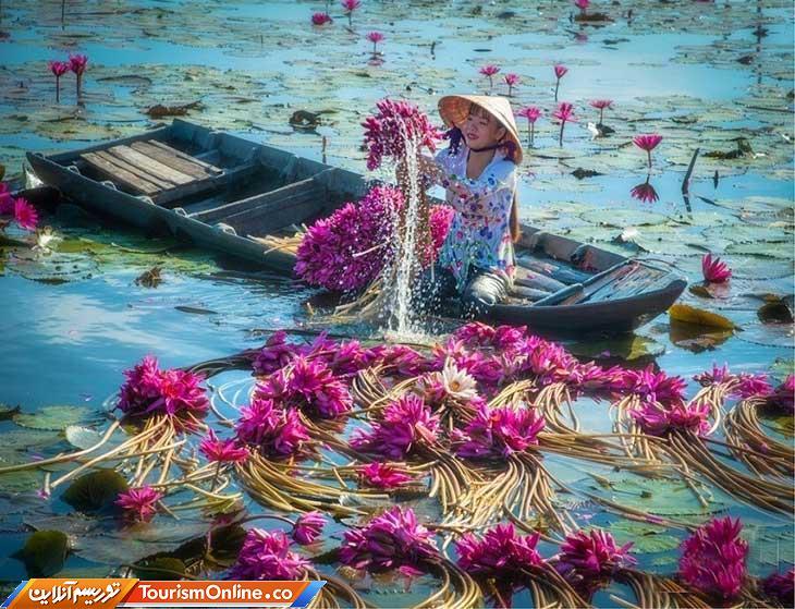نیلوفر آبی ویتنام