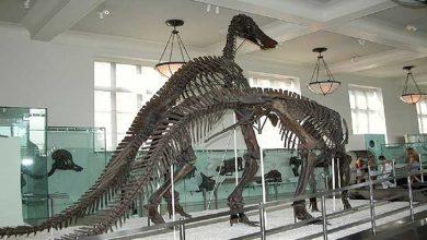موزه استخوان دایناسور