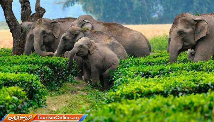 ساحل عاج کشور فیل ها