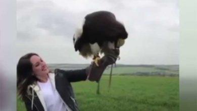 بزرگترین عقاب