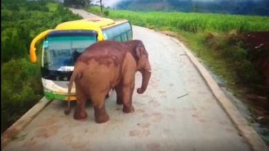 فیلی دنبال خودرو