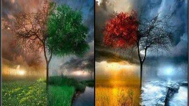 کدام فصل از سال را دوست دارید؟