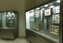 موزههای دانشگاهی