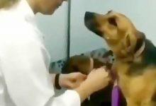 سگ و دامپزشک