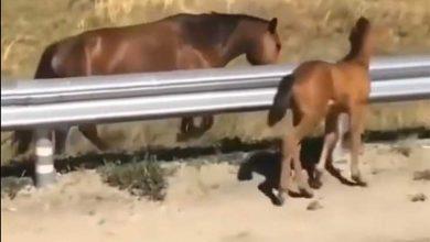اسب در جاده