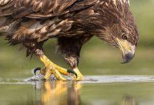 برخورد قطار با عقاب