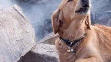 سگ زندهیاب زلزله ترکیه