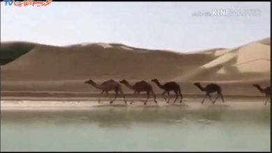 ساحل سیستان و بلوچستان