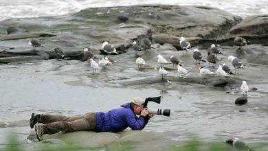 کارگاه پرنده شناسی